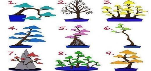 Выбери дерево и узнай, к какой работе ты предрасположен!