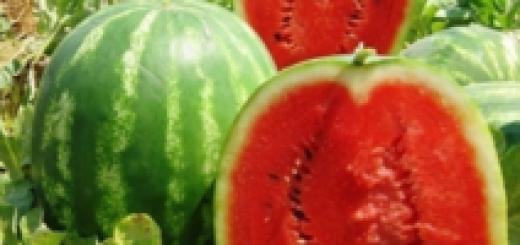 Арбуз на даче – выращивание и уход