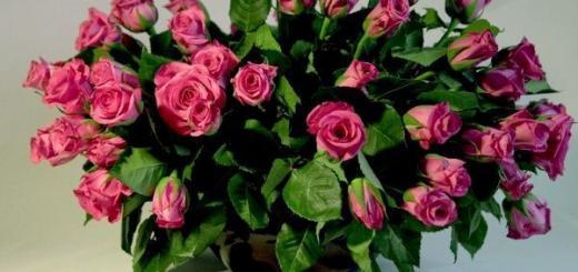 Как вырастить розу из букета?