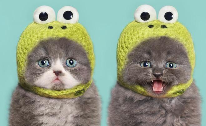 Необъяснимо, но факт: 99% кошек боятся огурцов