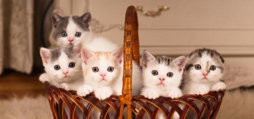 Работа мечты: вам платят за жизнь в Греции и заботу о котиках