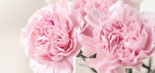 Красивые поздравления с Днем учителя: как поздравить педагогов оригинально