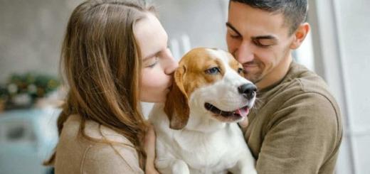 По стопам Tinder: в Литве запустили приложение для поиска собак
