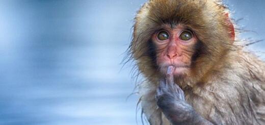 Самые комичные фотографии из дикой природы: встречайте финалистов