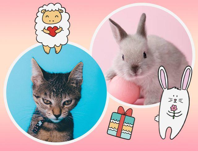 День животных. От наркотиков спасет кот, лошадка сблизит отца и дочь, а кролик устроит настоящую войну