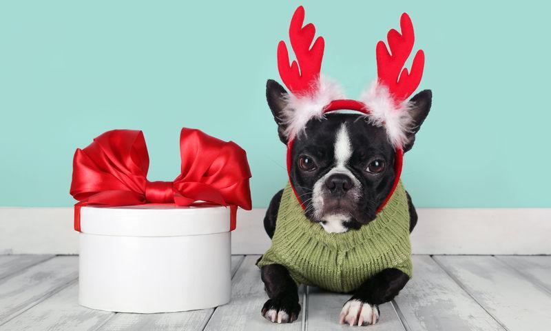 Стоит ли дарить на Новый год животных?