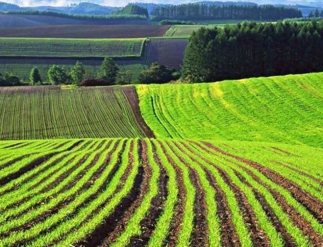 Исторический момент: Владимир Зеленский подписал закон об открытии рынка земли в Украине